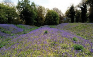 Fig 5- 1    Waves of Bluebells flow over the ramparts of this Iron Age hillfort at Coed y Bwnydd, a National Trust woodland and Scheduled Ancient Monument overlooking the Usk Valley in Monmouthshire [1].
