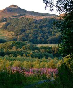 Coed Y Bont woodland